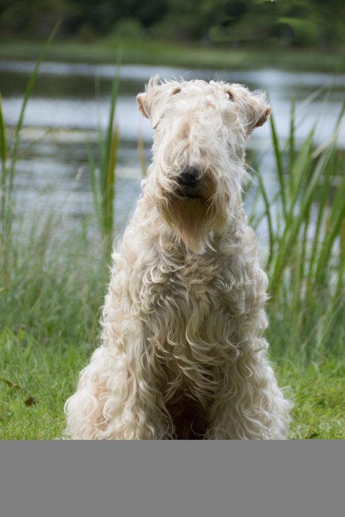 Veera Vetlandissa lammen rannalla Soilen ikuistamana, niin kauniina ja tyytyväisenä kivan päivän päätteeksi 😍